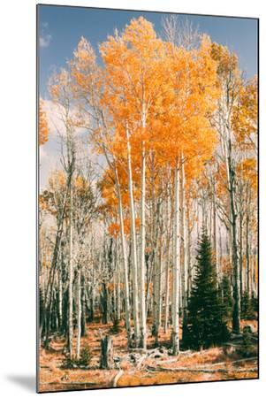 Autumn Sun Trees at Dixie National Forest, Southern Utah, Southwest-Vincent James-Mounted Photographic Print