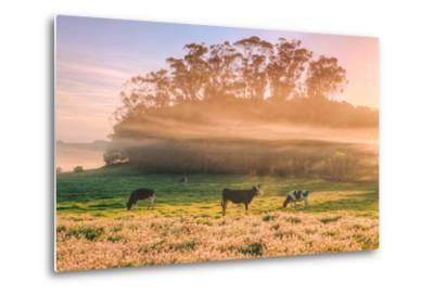 Country Farm and Morning Light, Rural Scene, Mist and Fog, Petaluma-Vincent James-Metal Print