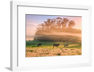Country Farm and Morning Light, Rural Scene, Mist and Fog, Petaluma-Vincent James-Framed Photographic Print