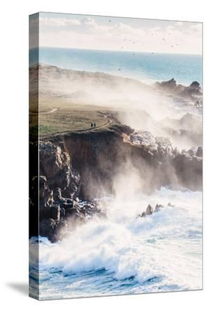 On the Misty Trail, Sonoma Coast, California State Parks-Vincent James-Stretched Canvas Print