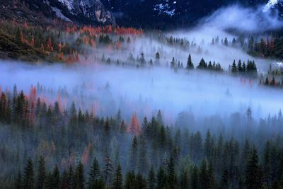 Fog and The Valley Floor, Trees from Tunnel View, Yosemite National Park-Vincent James-Framed Photographic Print