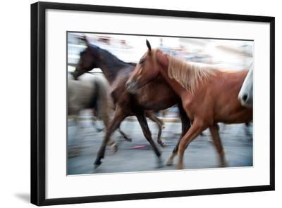 Saca De Las Yeguas- Festival, Town of Almonte, Province of Huelva, Andalusia, Spain-Felipe Rodriguez-Framed Photographic Print