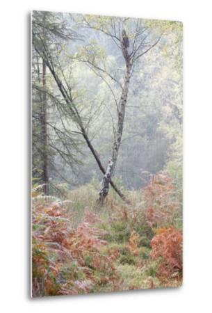 Trees in English Woodland-David Baker-Metal Print