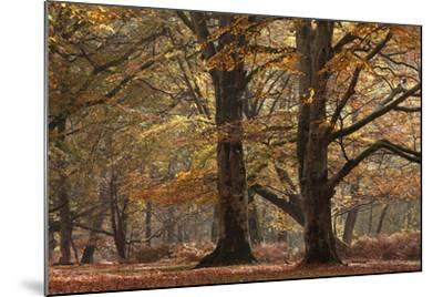 Trees in English Woodland-David Baker-Mounted Photographic Print