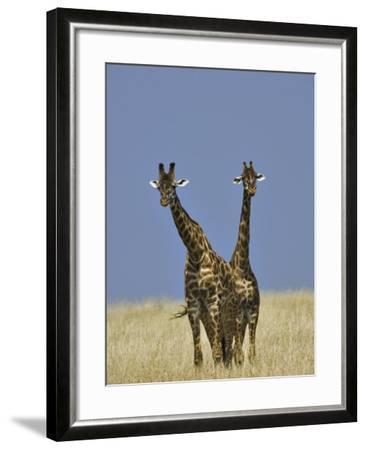 Pair of Masai Giraffes (Giraffa Camelopardalis Tippelskirchi), Masai Mara Game Reserve, Kenya-Adam Jones-Framed Photographic Print