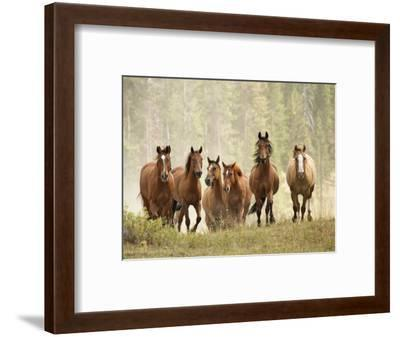 Horses on Ranch in Montana During Roundup-Adam Jones-Framed Photographic Print