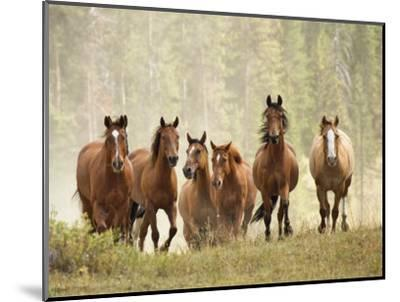 Horses on Ranch in Montana During Roundup-Adam Jones-Mounted Photographic Print