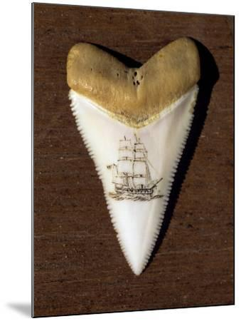 Scrimshaw Carving on a Great White Shark Tooth (Carcharodon Carcharias)-David Fleetham-Mounted Photographic Print