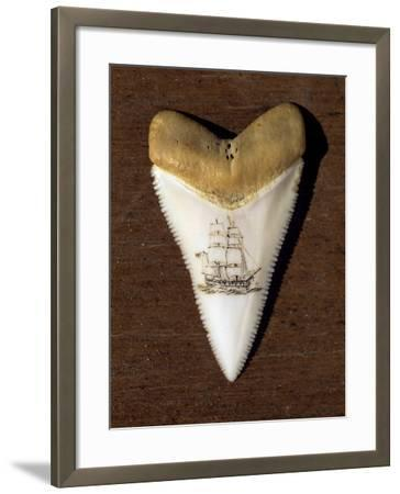 Scrimshaw Carving on a Great White Shark Tooth (Carcharodon Carcharias)-David Fleetham-Framed Photographic Print