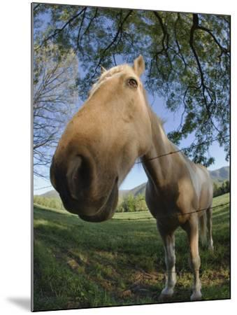 Fisheye View of Horse Looking over Fence, Cades Cove, Great Smoky Mountains N.P. TN-Adam Jones-Mounted Photographic Print