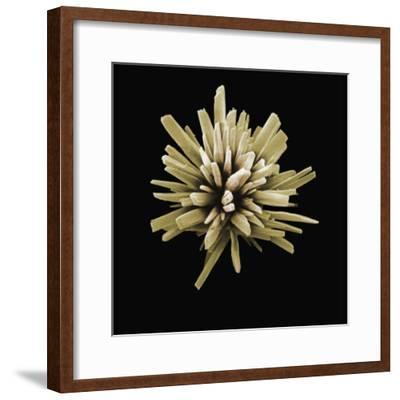 A Scanning Electron Micrograph of a Detergent Crystal Magnified X6000-David Phillips-Framed Photographic Print