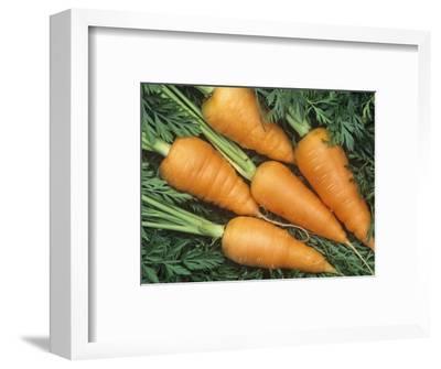 Carrots, Red Cored Chantenay Variety (Daucus Carota)-Wally Eberhart-Framed Photographic Print