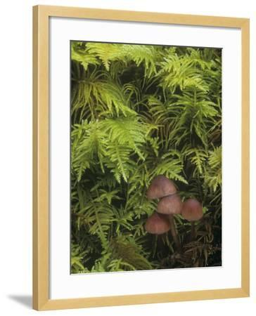 Mushrooms Growing Among Mosses on the Forest Floor-Doug Sokell-Framed Photographic Print