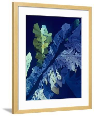 Tartaric Acid Crystals Viewed with Polarized Light-George Musil-Framed Photographic Print