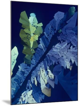 Tartaric Acid Crystals Viewed with Polarized Light-George Musil-Mounted Photographic Print