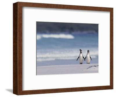 Magellanic Penguin Couple, Spheniscus Magellanicus, Falkland Islands-Joe & Mary Ann McDonald-Framed Photographic Print