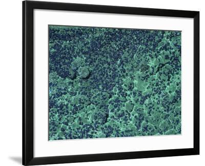 Azurite and Malachite, Bisbee, Arizona, USA-Ken Lucas-Framed Photographic Print