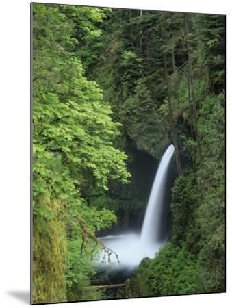 Metlako Falls Cascading into Eagle Creek, Columbia River Gorge National Scenic Area, Oregon, USA-Adam Jones-Mounted Photographic Print
