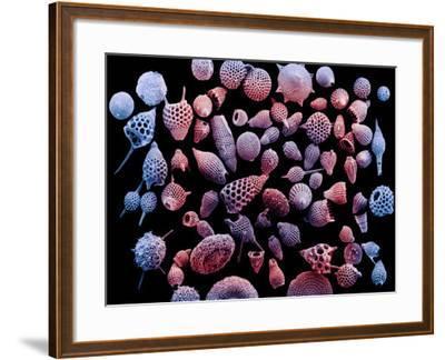 Variation in Radiolarian Shells or Tests-Richard Kessel-Framed Photographic Print