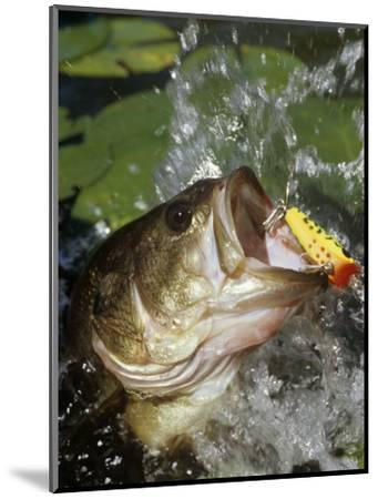 Largemouth Bass with Surface Lure-Wally Eberhart-Mounted Photographic Print