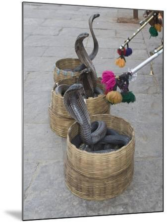 Snake Charmers Baskets Containing Cobras, Jaipur, India-Hal Beral-Mounted Photographic Print