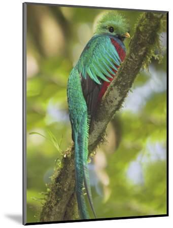 Quetzal, Costa Rica-Glenn Bartley-Mounted Photographic Print