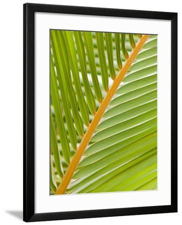 Close Up of a Palm Leaf-Ashley Cooper-Framed Photographic Print