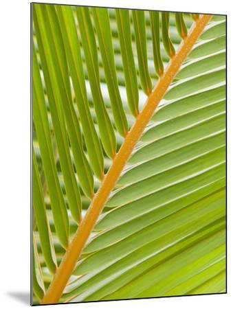 Close Up of a Palm Leaf-Ashley Cooper-Mounted Photographic Print