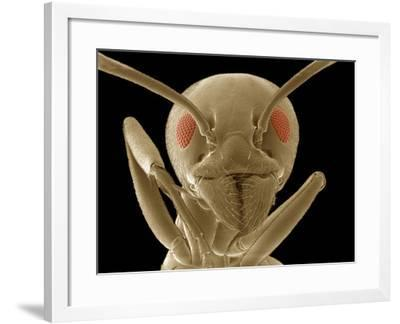 Ant Face Showing the Antennae, Compound Eyes, Mouthparts, and Forelegs, SEM-Thomas Deerinck-Framed Photographic Print