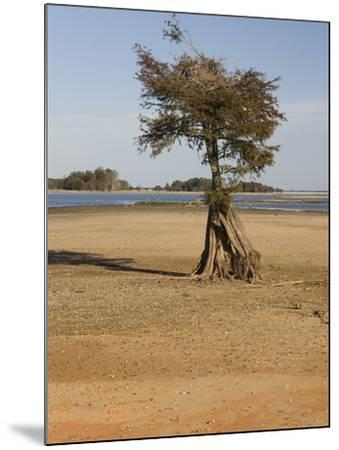 Dry Lake Bed of Lake Marion in the Santee Cooper Lake System During the Fall Drought of 2009-Marc Epstein-Mounted Photographic Print