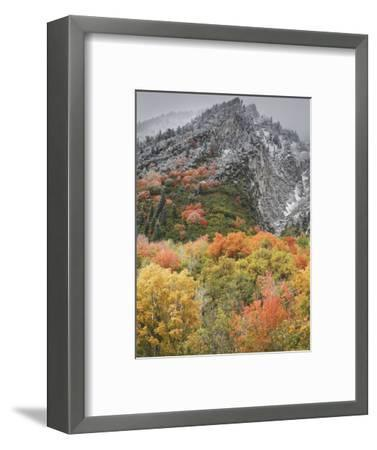 An Autumn Snowfall Decorates the Mountainsides and Trees of Little Cottonwood Canyon-Don Grall-Framed Photographic Print
