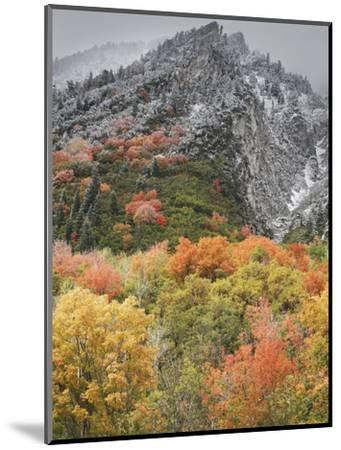 An Autumn Snowfall Decorates the Mountainsides and Trees of Little Cottonwood Canyon-Don Grall-Mounted Photographic Print