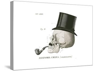 Dandy Bones II-Sue Schlabach-Stretched Canvas Print