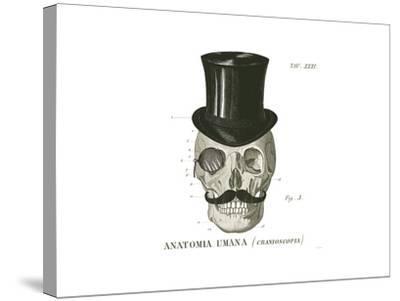 Dandy Bones I-Sue Schlabach-Stretched Canvas Print