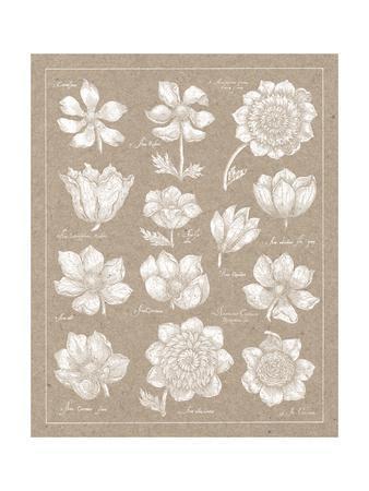 Anemone Plate I-Wild Apple Portfolio-Framed Art Print