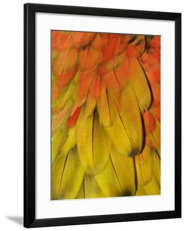 Feather Pattern on Macaw-Adam Jones-Framed Photographic Print