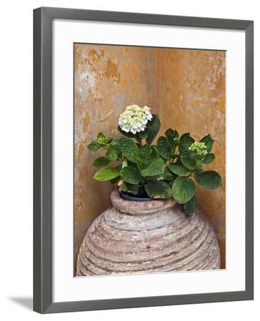 Flower in Pot, Crete, Greece-Adam Jones-Framed Photographic Print