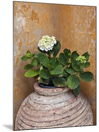 Flower in Pot, Crete, Greece-Adam Jones-Mounted Photographic Print