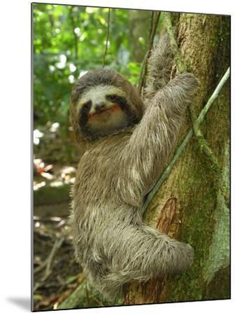 Brown-Throated Three-Toed Sloth (Bradypus Variegatus), Cahuita National Park, Costa Rica-Thomas Marent-Mounted Photographic Print