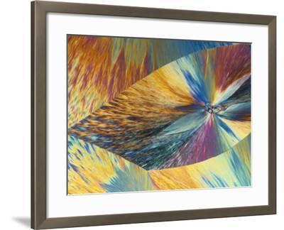 Vitamin C or Ascorbic Acid Crystals, Polarized LM-George Musil-Framed Photographic Print