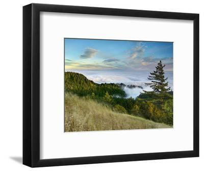 Fog Rolling over the Lower Hills at Mt. Tamalpais On A Late Spring Evening, California, USA-Patrick Smith-Framed Photographic Print
