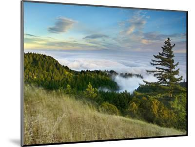 Fog Rolling over the Lower Hills at Mt. Tamalpais On A Late Spring Evening, California, USA-Patrick Smith-Mounted Photographic Print