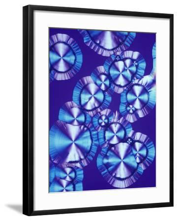 Vitamin C (Ascorbic Acid) Crystals, Polarized LM-Arthur Siegelman-Framed Photographic Print