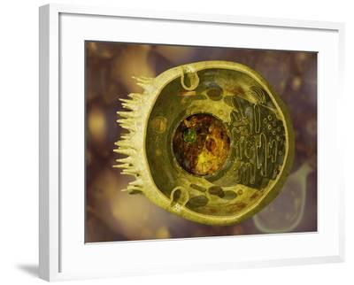 Biomedical Illustration of a Cross-Section of a Human Eukaryotic Cell and its Organelles-Carol & Mike Werner-Framed Photographic Print