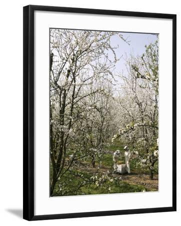 Beekeepers Placing Honey Bee Hives Among Almond Trees in an Orchard-Eric Tourneret-Framed Photographic Print