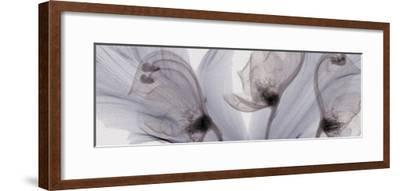 X-Ray of Tulip Petals and Monkshood Flowers-George Taylor-Framed Photographic Print