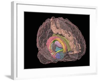 Human Brain Showing the Limbic System-Arthur Toga-Framed Photographic Print