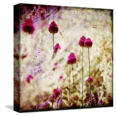 Pink Ladies-Arabella Studios-Stretched Canvas Print