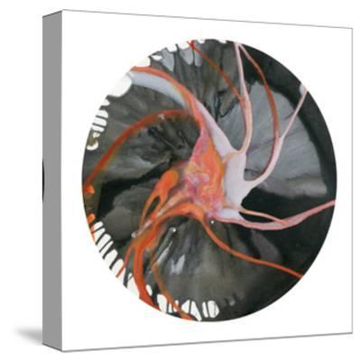 Spin Art 16-Kyle Goderwis-Stretched Canvas Print