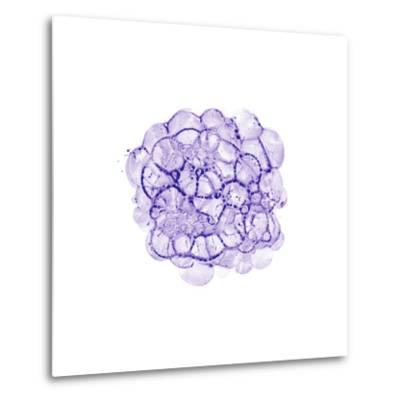Cellular Clouds in Purple C-THE Studio-Metal Print